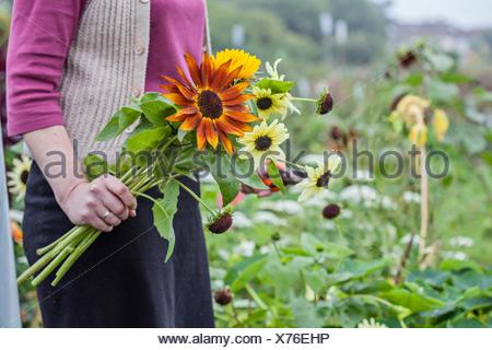 Cropped view of woman cutting fresh flowers at allotment - Stock Photo