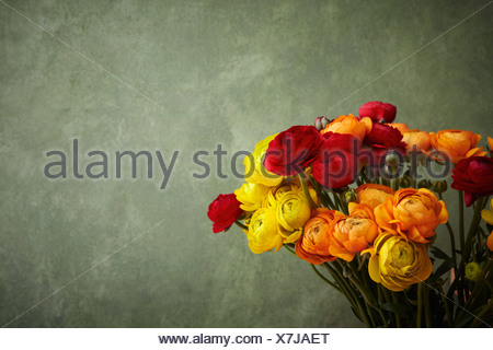 Hamburg, Close up of ranunculus - Stock Photo
