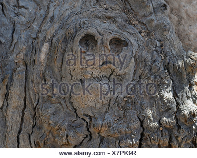 Shape of a face or skull in the knotted wood of a tree, Kings Canyon, Watarrka National Park, Northern Territory, Australia - Stock Photo