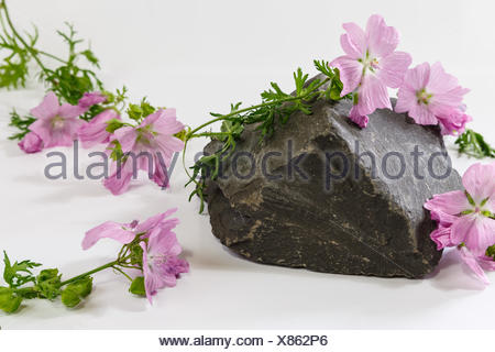 Rose mallow and slate stone - Stock Photo