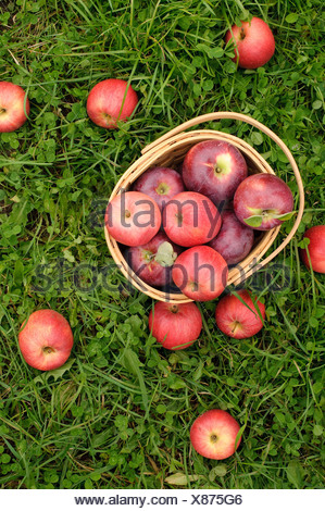 Apples in a basket on grass - Stock Photo