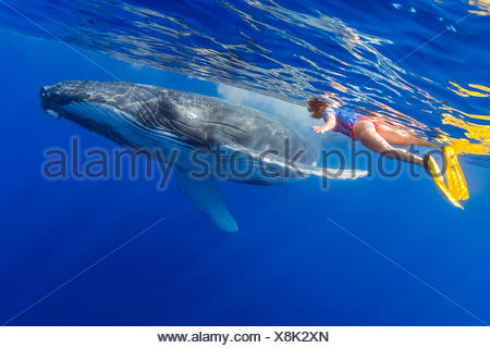 Woman Snorkeler and Humpback Whale, Megaptera novaeangliae, Hawaii, USA - Stock Photo