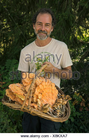 A man holds a basket of chicken of the woods mushrooms and honey mushrooms. - Stock Photo