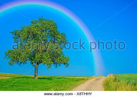 Weg mit Obstbaum und Regenbogen - Stock Photo