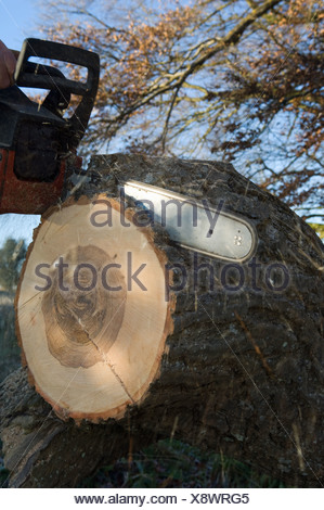 Close up of chainsaw cutting log - Stock Photo