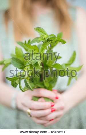 Woman holding a bunch of freshly picked mint. - Stock Photo