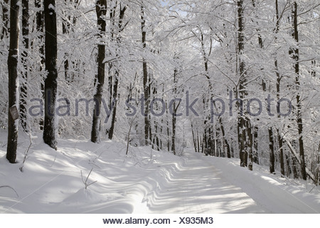 Snowy forest in winter, Canada - Stock Photo
