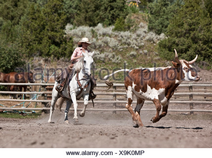 Cowgirl wrangler moving cattle in corral, ranching, Montana USA - Stock Photo
