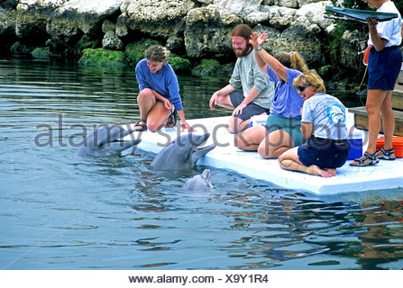 Guests meet dolphins Dolphin Research Center Grassy Key Florida Keys - Stock Photo
