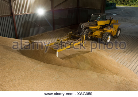 Forklift pushing grain in store - Stock Photo