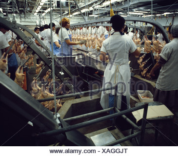 PROCESSING POULTRY / PENNSYLVANIA - Stock Photo