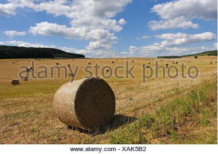 straw rolls in an harvested field, Allier department, Auvergne-Rhone-Alpes regionFrance, Europe. - Stock Photo