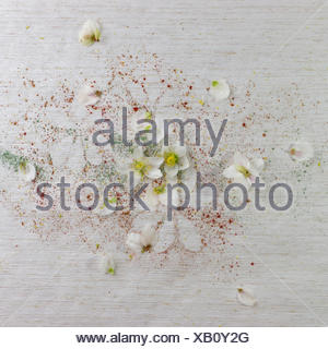 Arrangement of snow roses on old wallpaper - Stock Photo