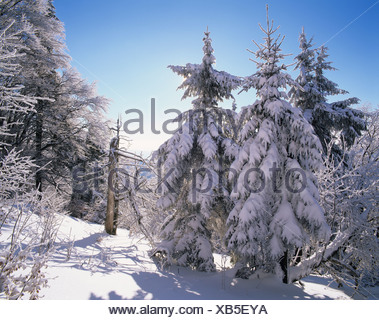 Winter landscape in Grosser Inselsberg Nature Reserve, near Brotterode, Thuringian Forest, Thuringia - Stock Photo
