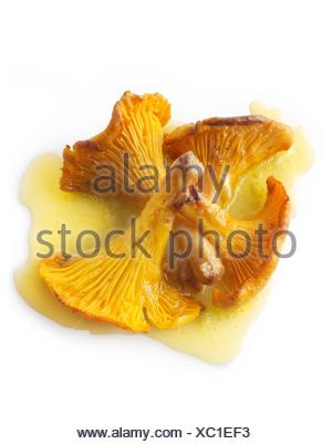 Wiild organic chanterelle or girolle Mushrooms (Cantharellus cibarius) or sauteed in butter. - Stock Photo