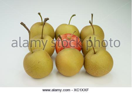 One Braeburn apple amidst Nashi pears, Germany - Stock Photo