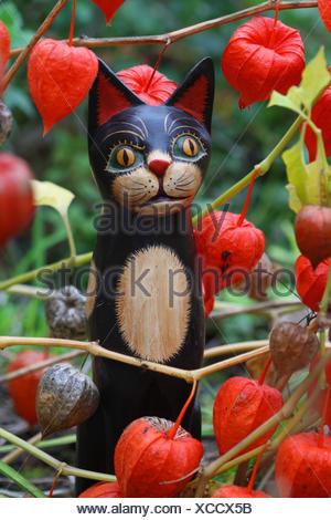 Chinese lantern, Physalis, cat figurine, - Stock Photo