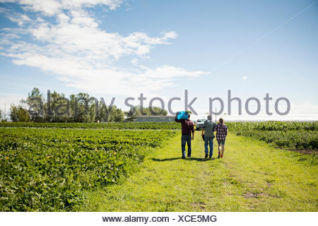 Farmers walking along green crops on sunny farm - Stock Photo