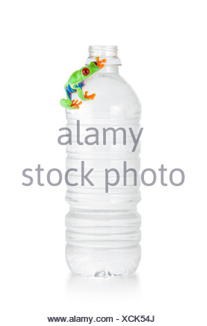 Red-eyed frog on a water bottle - Stock Photo