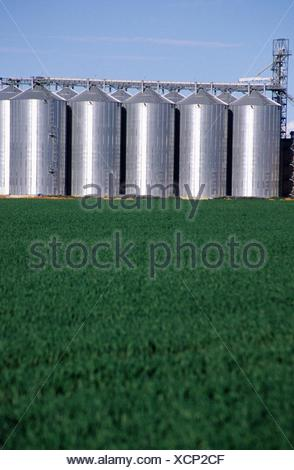 Silos holding cereal crops in the lower north region of South Australia - Stock Photo