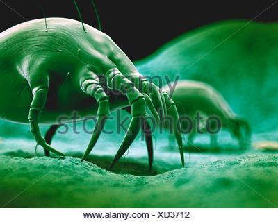 Dust mite, illustration. - Stock Photo