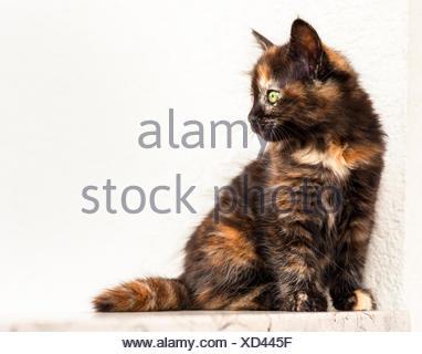 European young cat - Stock Photo