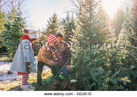 Young boy cutting down Christmas tree with father and sister - Stock Photo