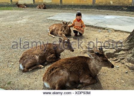 little girl among fallow deers in a Nara park petite fille parmi les daims sacrés, Nara, Japon - Stock Photo