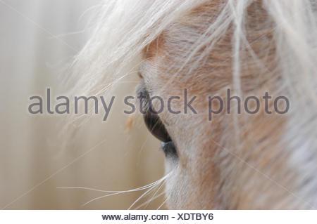 pferdeauge frontal - Stock Photo