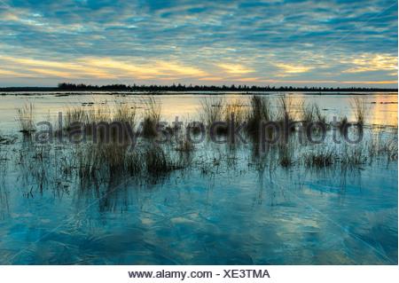winter in the moor, goldenstedter moor, diepholzer moorniederung, niedersachsen, germany - Stock Photo