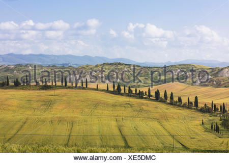Blue sky frames the green hills and typical cypresses of Crete Senesi (Senese Clays) province of Siena Tuscany Italy Europe - Stock Photo