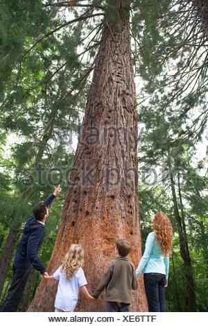 Family standing together at base of tall tree, rear view - Stock Photo