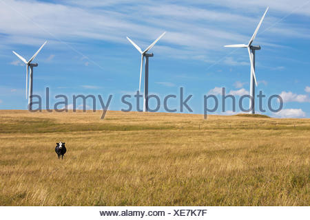 Cow and wind turbines in sunny rural field - Stock Photo