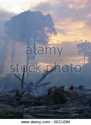 Tropical rainforest being burnt for cattle ranching.  Imataca Forest, Venezuela. - Stock Photo