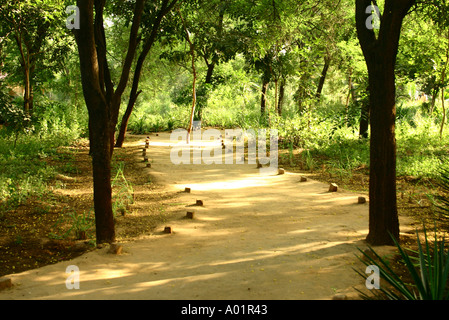 Evening sunlight on path with green trees Gandhinagar Gujarat India - Stock Photo