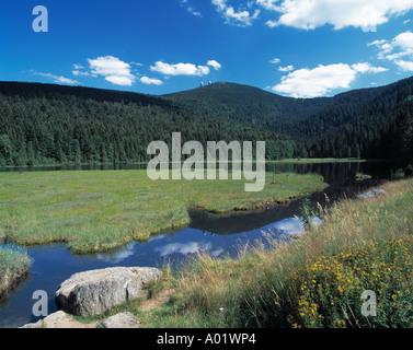 Waldgebiet, Waldlandschaft, Kleiner Arbersee, schwimmende Inseln im See, Lohberg, Naturpark Oberer Bayerischer Wald, - Stock Photo