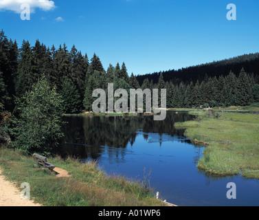Waldgebiet, Waldlandschaft, Nadelbaeume, Nadelwald, Kleiner Arbersee, schwimmende Inseln im See, Lohberg, Naturpark - Stock Photo