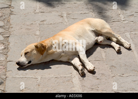 Image depicting the old addage let sleeping dogs lie - Stock Photo