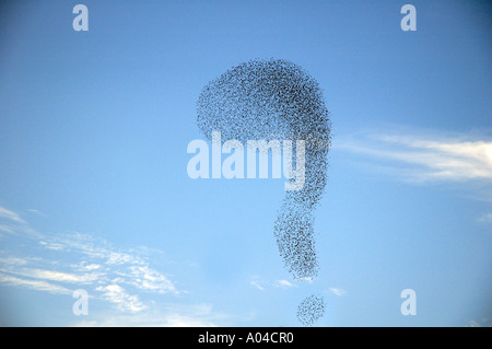 A flock of starlings form a question mark formation in the sky - Stock Photo