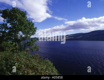 dh  LOCH NESS INVERNESSSHIRE Trees and Lochside near Drumnadrochit peaceful great glen scottish highland