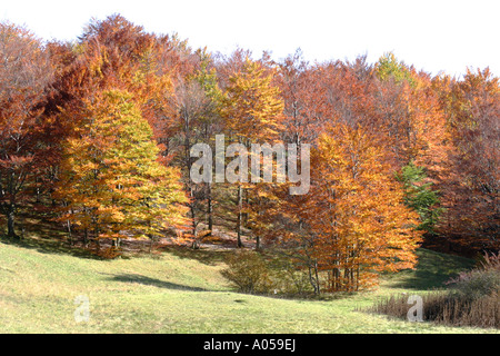 Beautiful fall/ Autumn colors of the trees in the Sibillini National Park,Le Marche ,Italy - Stock Photo