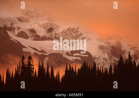 Pine trees towering above the sunset clouds with majestic Mt Rainier in the background Washington USA - Stock Photo