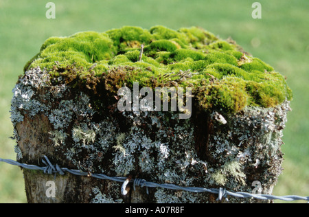 Lichen and Moss on a Fencepost - Stock Photo