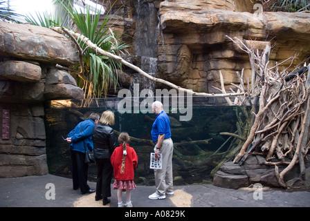 Visitors explore Animal Planet Australia exhibit National Aquarium Baltimore MD Maryland America USA - Stock Photo