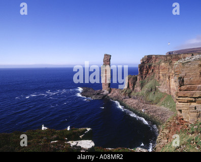 dh Old Man of Hoy HOY ORKNEY Sea stack red sandstone cliffs Fulmar birds nesting Atlantic Ocean - Stock Photo