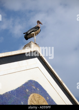 Marabou stork perched on top of a building in Kampala, Uganda - Stock Photo