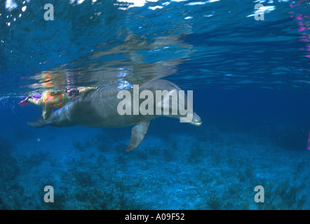 A young girl swims alongside a dolphin in the Bahamas - Stock Photo