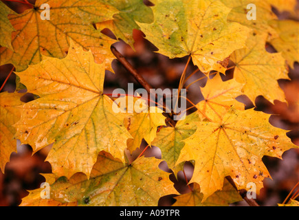 Herbstlaub Blaetter am Boden, autumn foliage leaves on the ground - Stock Photo