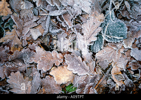 Herbstlaub Blaetter am Boden, autumn foliage leaves on the ground - Stock Photo