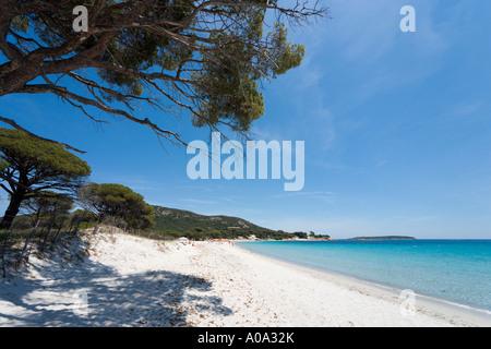 Palombaggia Beach, near Porto Vecchio, Corse du Sud, Corsica, France - Stock Photo